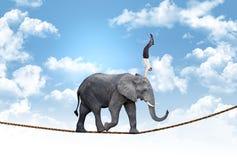 Business acrobat. Man on acrobat elephant abstract concept stock photos
