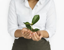 Business Attire Female Holding Seedling Royalty Free Stock Photos