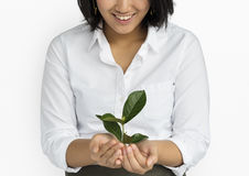 Business Attire Female Holding Seedling Stock Images