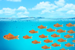 Business background. Sweet red fish business background Stock Image