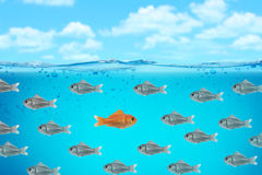 Business background. Sweet red fish business background Stock Images
