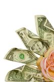 Business is blooming. Dollar notes with silk rose as center point, concept business growth Stock Photo