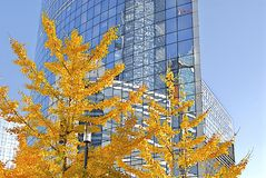 Business building. Office building with glass facade, in autumn, on a beautiful sunny day royalty free stock photo