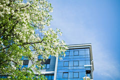 Business building in spring Royalty Free Stock Images