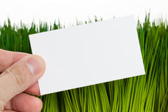 Business Card and green grass Stock Image
