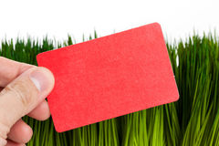 Business Card and green grass Stock Images