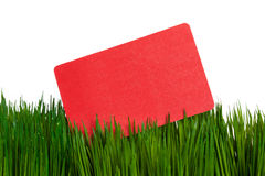 Business Card and green grass Stock Photography