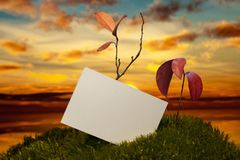 Business card on moss at sunset. Business card and plants on moss at sunset Stock Image