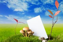 Business card with mushrooms and plants on the fress meadow. Business card with stones, mushrooms and plants on green fresh moss and grass Stock Image