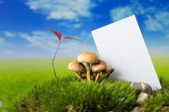 Business card, plant and mushrooms on moss on the meadow. Business card on the green meadow Stock Photo