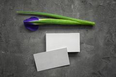 Business cards and iris flower. On grey background royalty free stock images