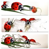Business cards set with beetles in nature style Stock Images