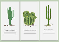 Business cards set with a cactus design. stock illustration