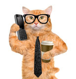 Business cat. Stock Images
