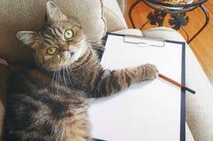 Business Cat Lies On Empty Clipboard Stock Photos