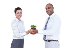 Business colleagues holding plant and looking at camera Royalty Free Stock Images