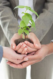 Business colleagues holding plant together Stock Image