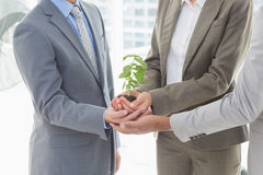 Business colleagues holding plant together Stock Photos