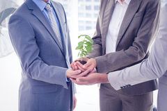 Business colleagues holding plant together Stock Images
