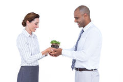 Business colleagues holding plant together Stock Photography
