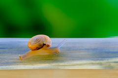 Business competition requires quicktime concept. Snail high speeds stock photo