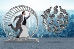 The business concept with businessman running on hamster wheel Stock Images