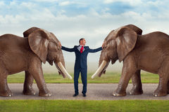 Business conflict resolution concept. Businessman and elephants stock photography