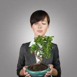 Business development like tree Royalty Free Stock Photos