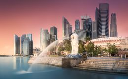 Business district and Marina bay in Singapore. The Merlion fountain and Singapore skyline royalty free stock photo