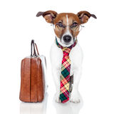 Business dog Royalty Free Stock Images