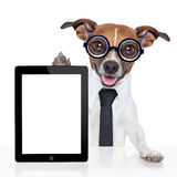 Business dog Royalty Free Stock Photo