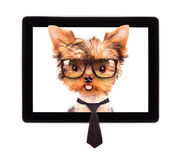 Business dog on a digital tablet screen. Business dog with tie and glasses on a digital tablet screen stock photo