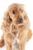 The business dog Stock Photos