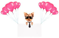 Business dog holding banner with balloons Royalty Free Stock Photos