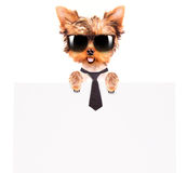 Business dog holding banner Royalty Free Stock Image