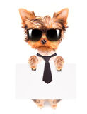 Business dog holding banner. Business dog holding empty banner isolated on white Royalty Free Stock Images