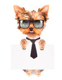 Business dog holding banner Royalty Free Stock Photography