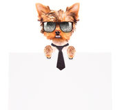 Business dog holding banner Stock Images