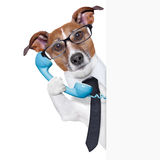 Business dog Stock Image