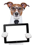 Business dog Stock Photo