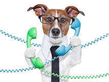 Business dog Stock Images