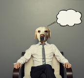 Business dog thinking. Business dog sitting on the chair and thinking over grey background royalty free illustration