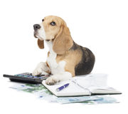 Business dog typewriter. On a white background stock images