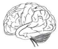 Business Drawing Brain Of Marketing Strategy Stock Photo
