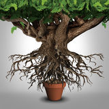 Business Expansion. And too big to manage business that does not fit metaphor or expanding outgrowing your home concept as a large tree  with a small plant pot Stock Photo