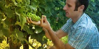 Business and farmer Stock Photos