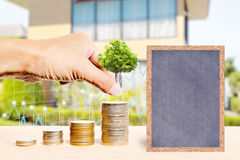Business finance and real estate concepts. Business finance and real estate concepts, Hand stacking coins with tree growing, Chalkboard free space for you Royalty Free Stock Photos