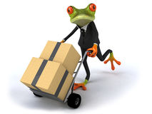 Business frog Stock Images