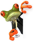 Business frog and champagne Stock Images