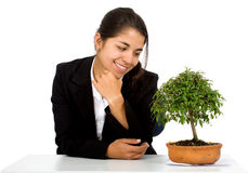 Business girl with a tree Royalty Free Stock Photography